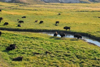 bison-herd-hayden-valley-yellowstone-natl-park-2011-09-08_1936x1296